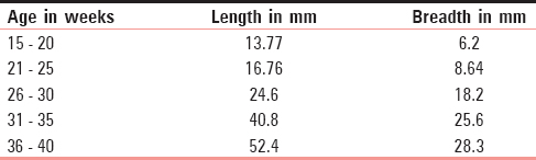 Table 3: Mean dimensions (Length and Breadth) at different gestational ages